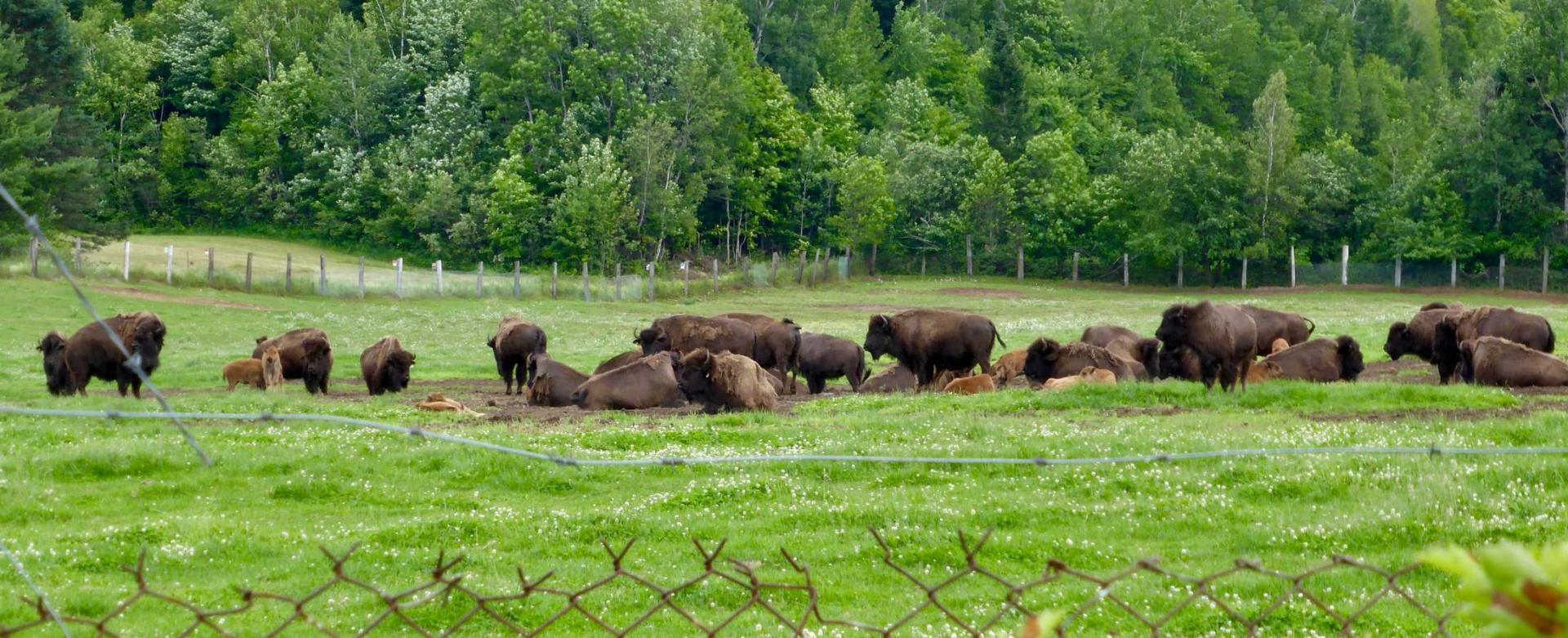 Terre des Bisons, Rawdon