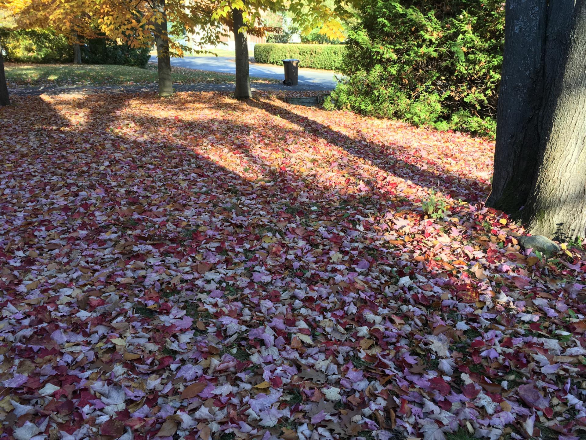 Josée Desrosiers feuilles d'automne Mascouche