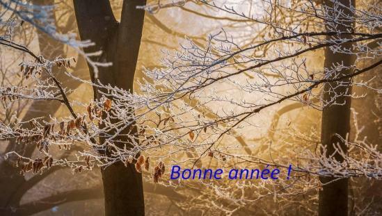 Lumiere hivernale
